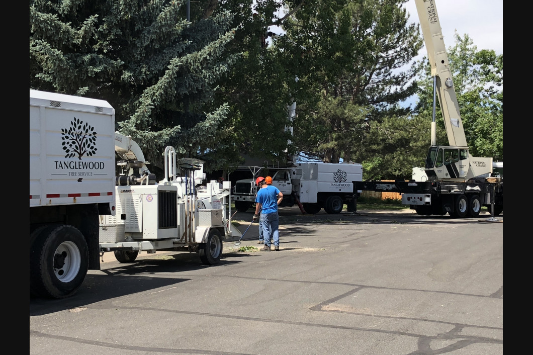 Tree Service fort collins, co