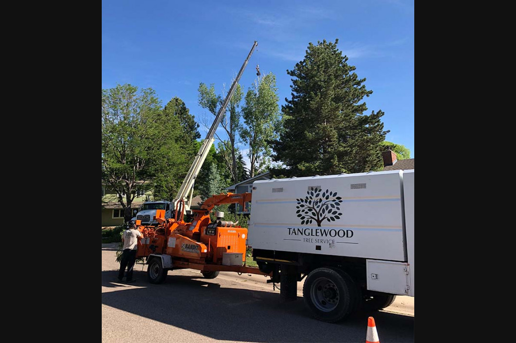 Tree Trimming fort collins, CO