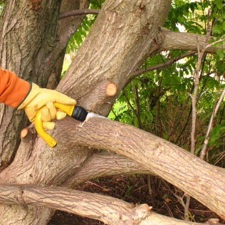 Tree pruning Fort Collins, CO
