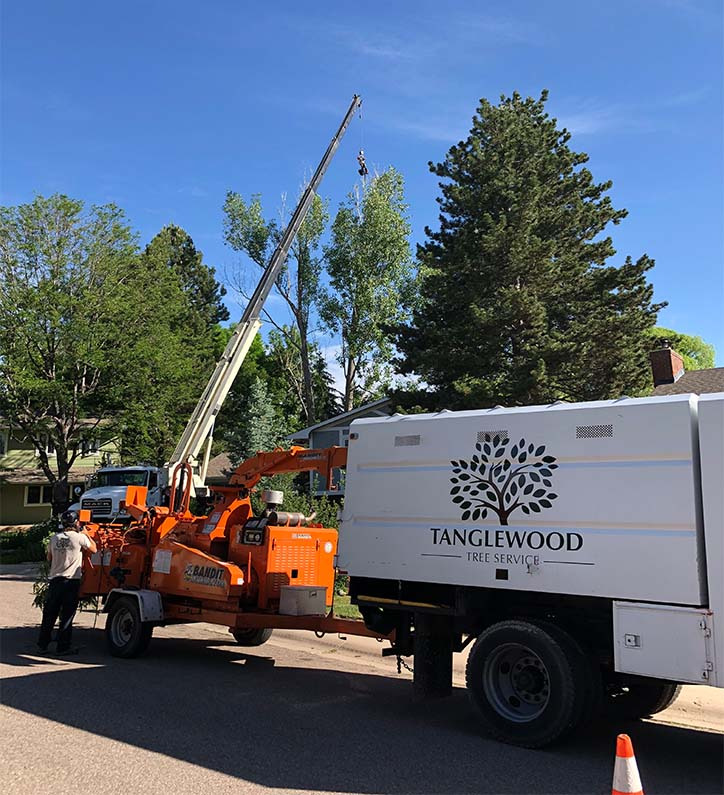 Tree Removal Fort Collins, CO